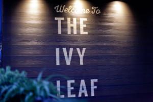 The Ivy Leaf